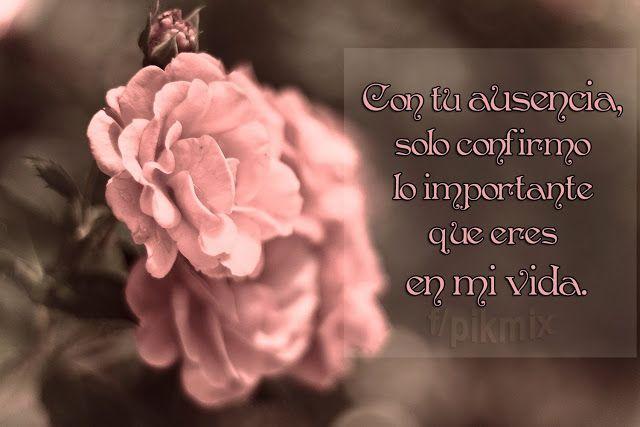 Con tu ausencia ○ Frases de amor ○ Rosas rosas, macro