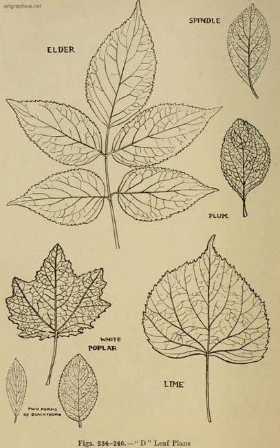 Forms And Textures Of Young Tree Leaves Leaf Drawing Leaves Sketch Leaves Pattern Design