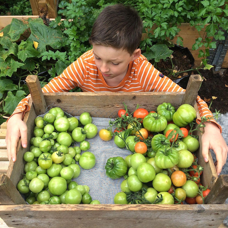 Vi sylter grønne tomater - bokashinorge.no