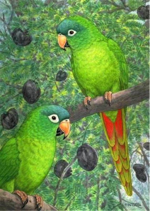 Imágenes Arte Pinturas Loros Al óleo Arte De Aves Pinturas De Aves Pájaros Pintados