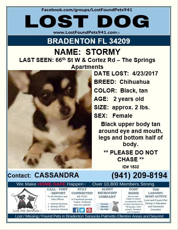 Have You Seen Stormy Lost Dog Please Rt Chihuahua 2 Lbs