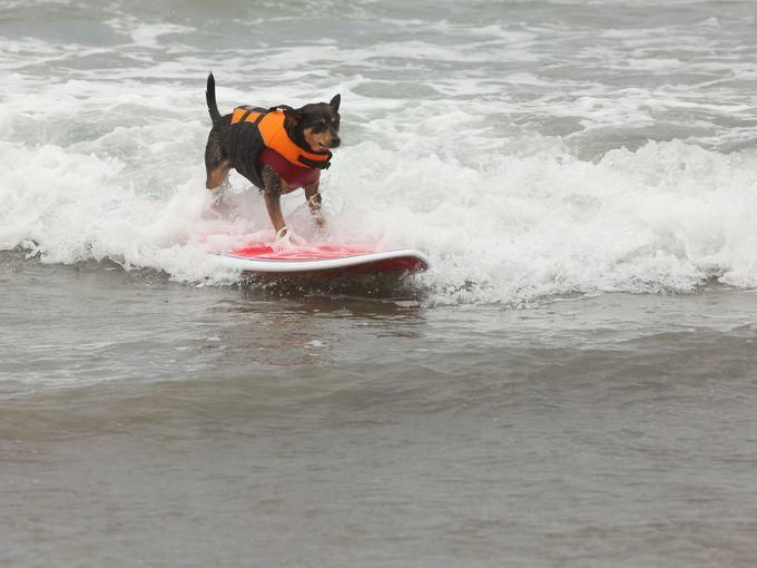 Ted Nguyen @TedNguyen 7m  Check out @USAToday's most dog-friendly beaches: http://www.usatoday.com/experience/beach/photo-gallery/best-dog-friendly-beaches/6653331/ … #dog #dogfriendlyplaces #beaches #travel pic.twitter.com/LVGKLnWdmS