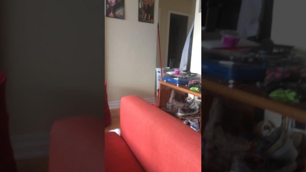 Abi plays fetch https://youtu.be/H2xUEyOTV8E