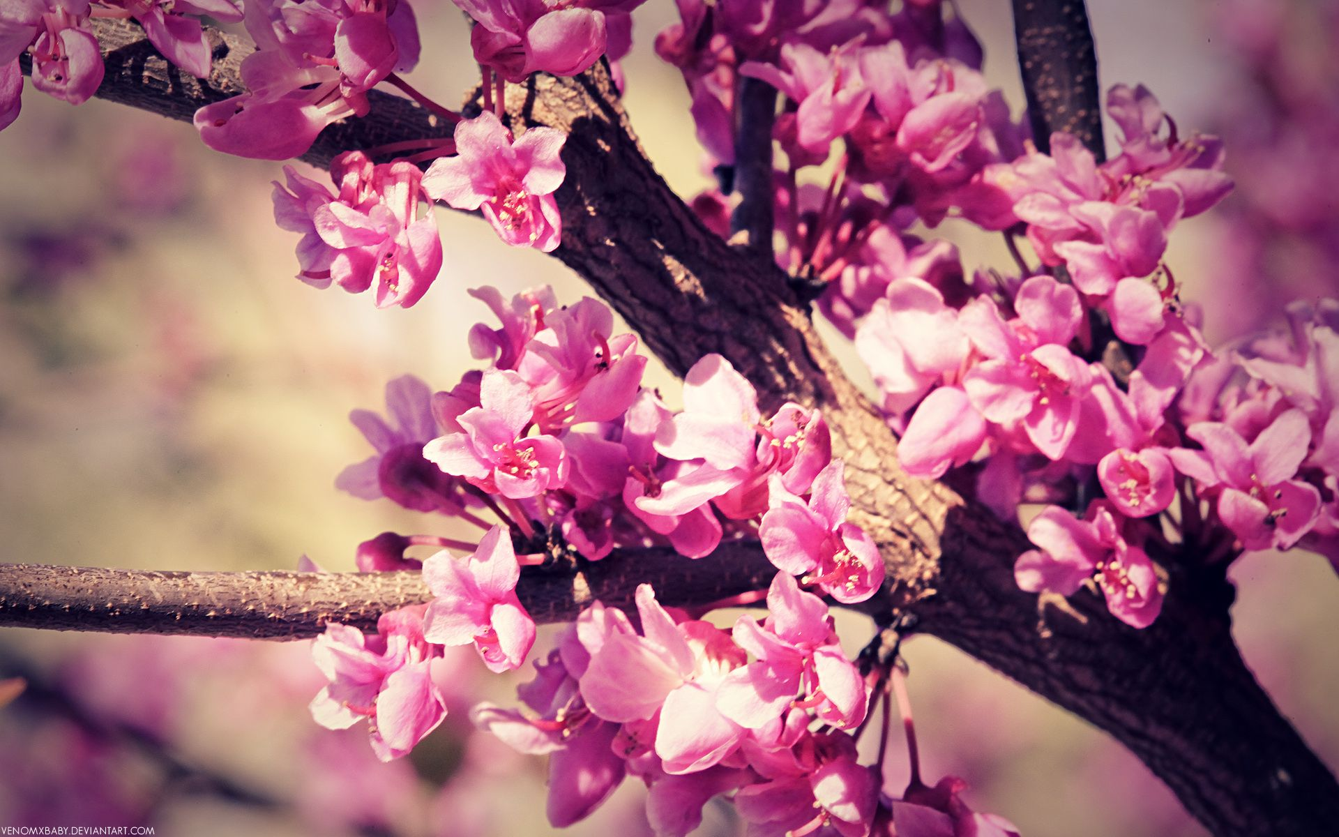 Spring Spring Flowers Wallpaper Spring Wallpaper Pink Spring Flowers