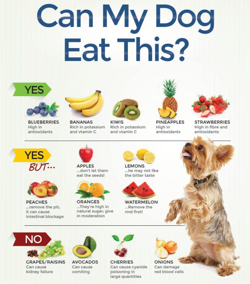 What Can Dogs Eat List (With Images)