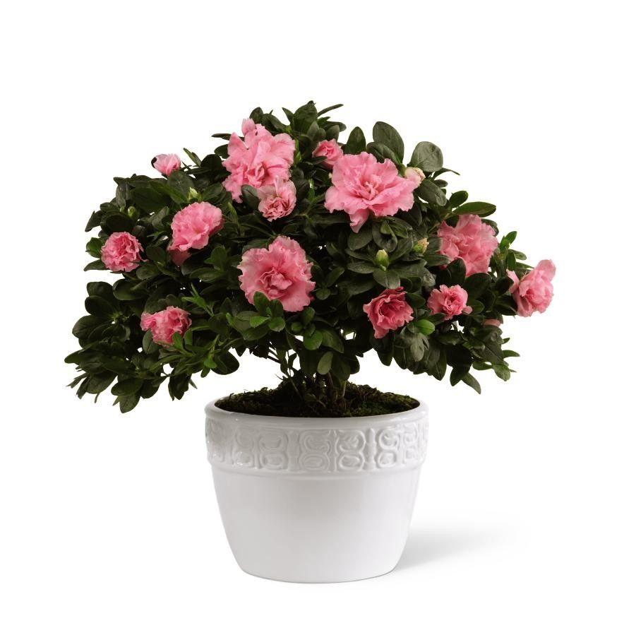 Ftd vibrant sympathy planter sympathy flowers flower