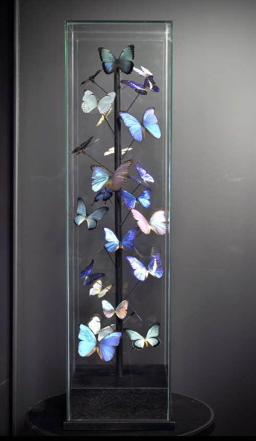 Sp cial papillons morphos 25 sous globe carr cabinet de curiosit pinterest carr s - Globe cabinet de curiosite ...