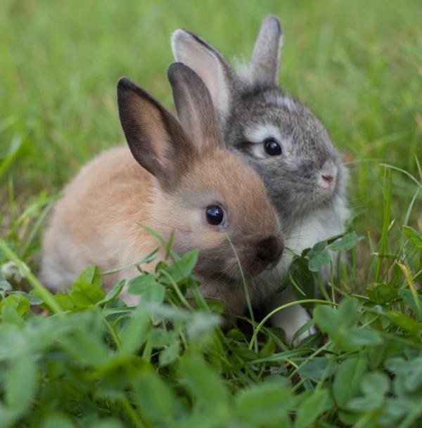 Kaninchen Haltung Grundlagen   Rabbit attitude basics