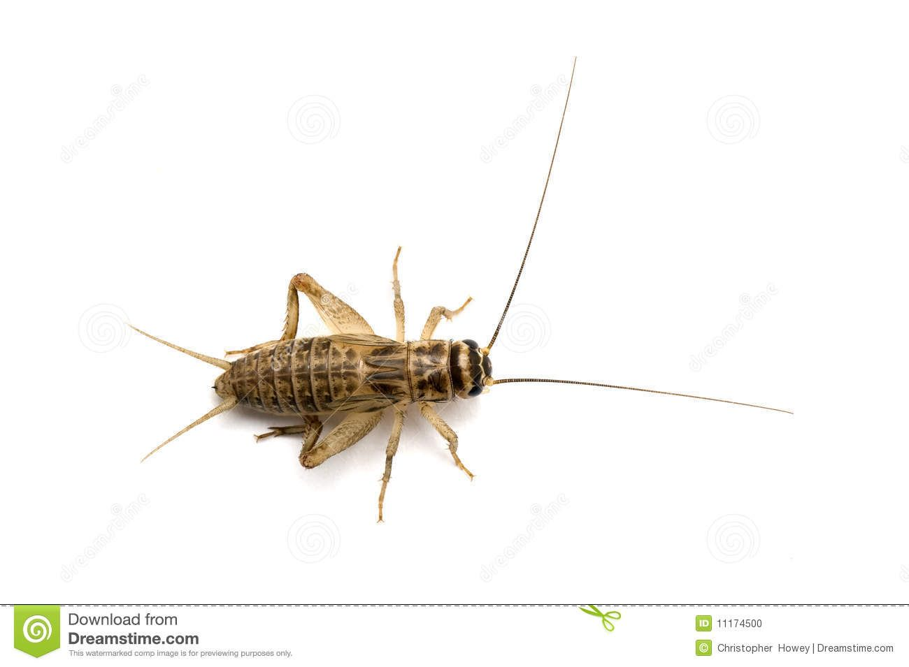 Brown House Cricket From Above Stock Photo Image 11174500 Brown House Stock Photos Photo