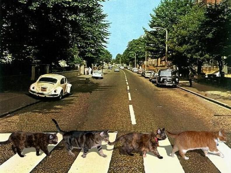 Cat day + 45th anniversary of shooting Abbey Road cover! ;)