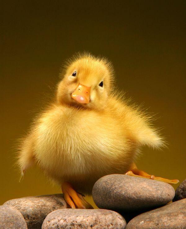 Source: pixdaus.com | Cool | Pinterest | Bird, Animal and Feathers