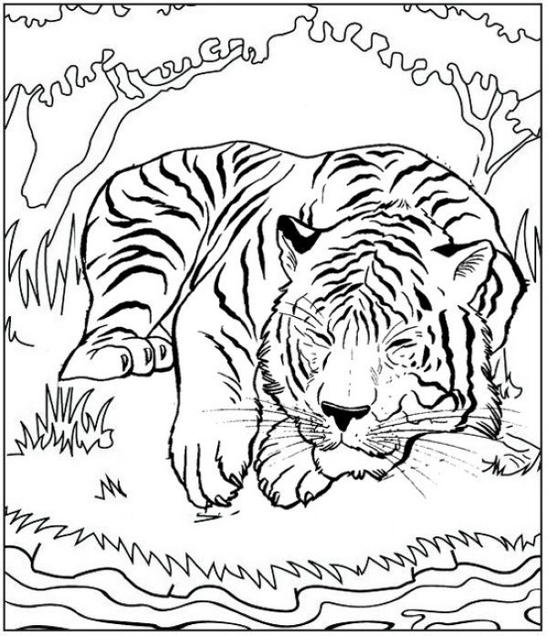 Tiger Sleeping Coloring Pages