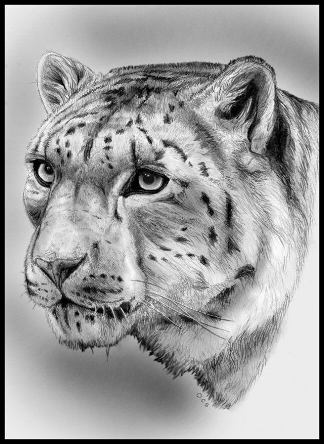 Realistic Lion Face Drawing Detailed pencil drawing of a