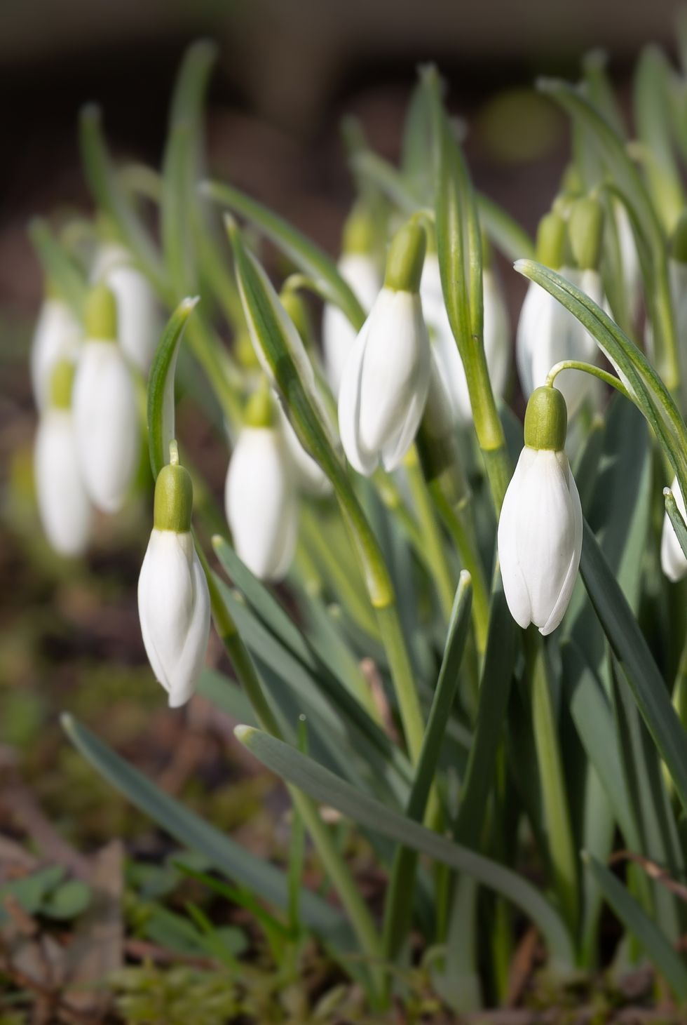 These Flowers Actually Bloom In Winter So You Can Garden Year Round White Flowering Plants Flowers Uk Winter Flowers Garden