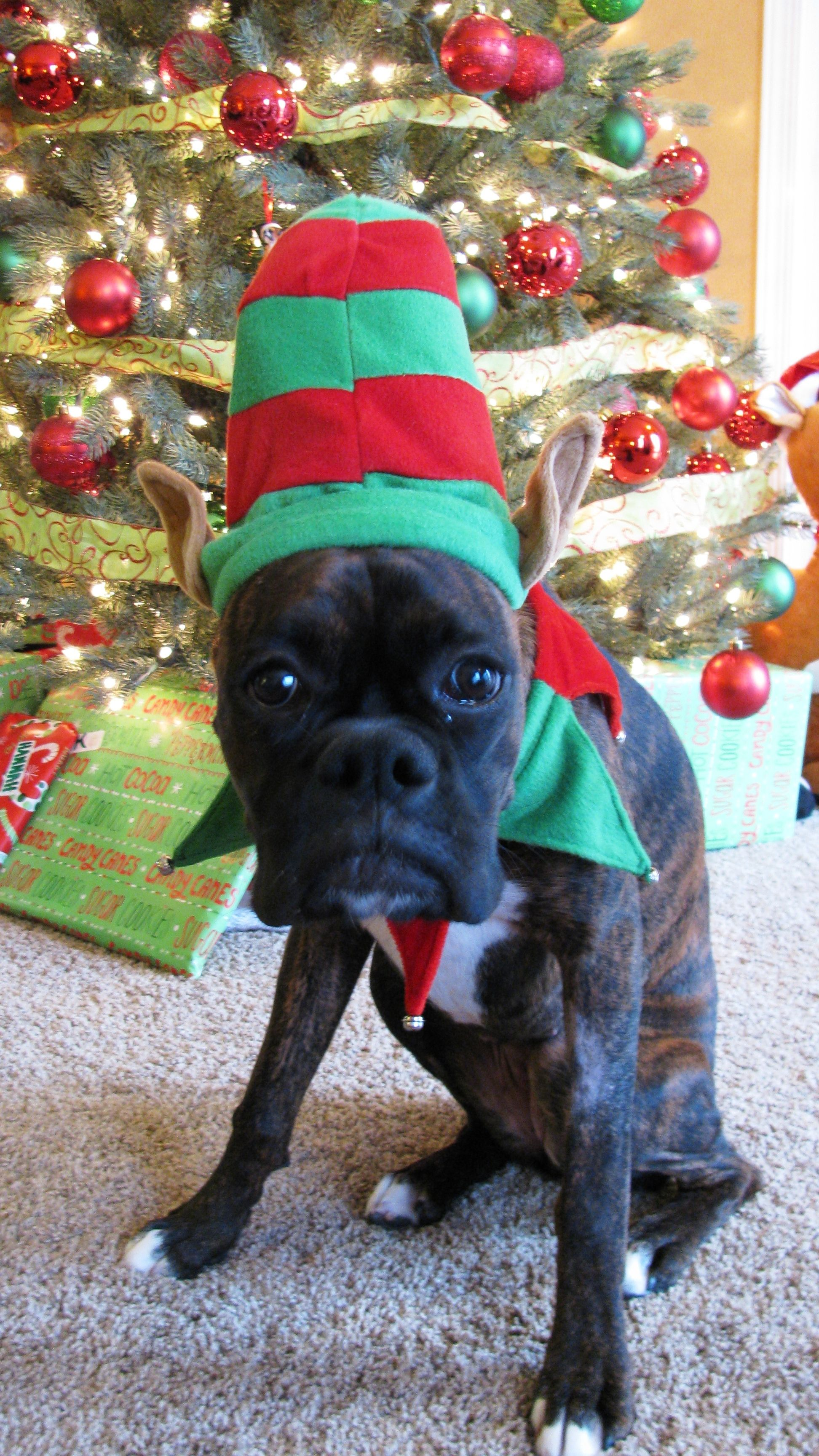 Can't wait for my first puppy Christmas need a hat like
