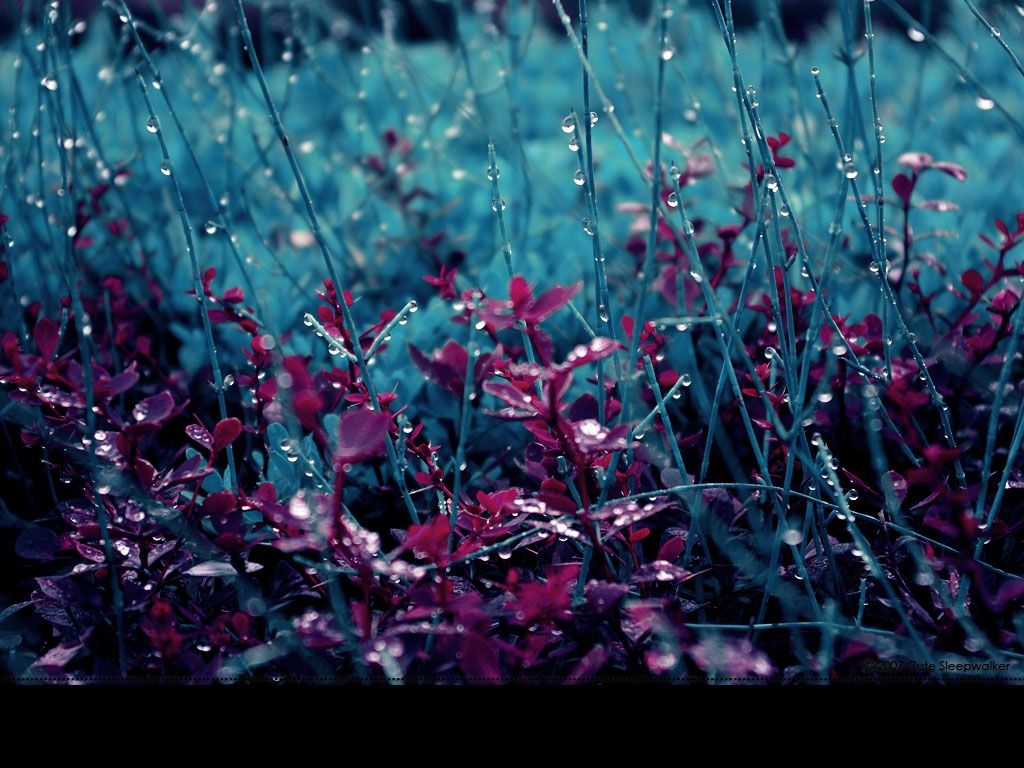 Rain Wallpapers for Windows