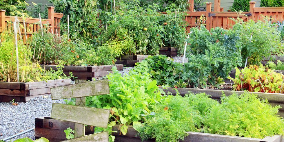 Use These Garden Layout Ideas To Create A Vibrant Backyard Backyard Garden Layout Garden Layout Backyard Garden