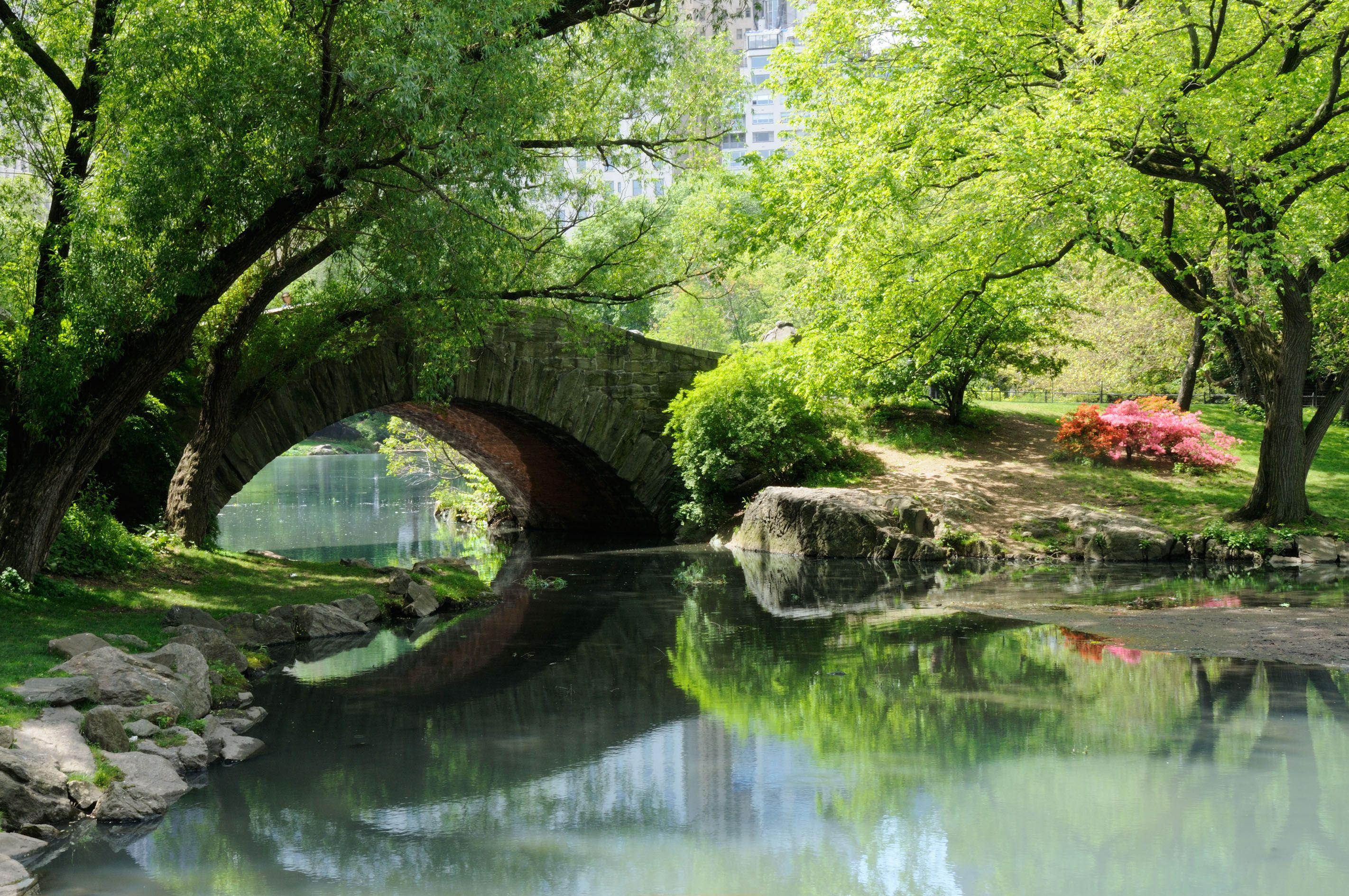 Lo stagno di Central Park
