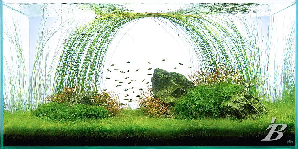 My favorite planted tank of all time. Created for the ...