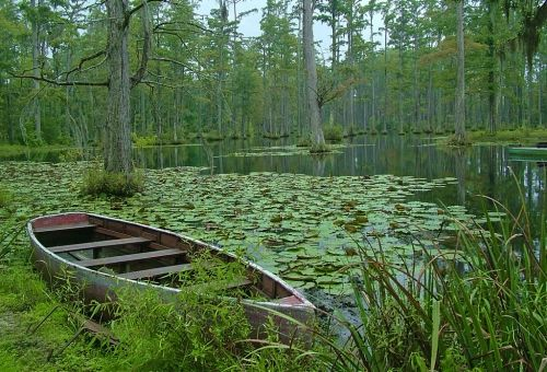 The Notebook The Lake Scene With Swans Was Shot At Cypress Gardens The Animals Weren 39 T Native