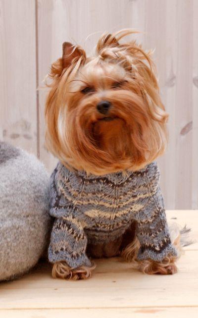 Neulemalli Pienen Koiran Neule Diy Dog Sweater Diy Dog Stuff Dog Clothes
