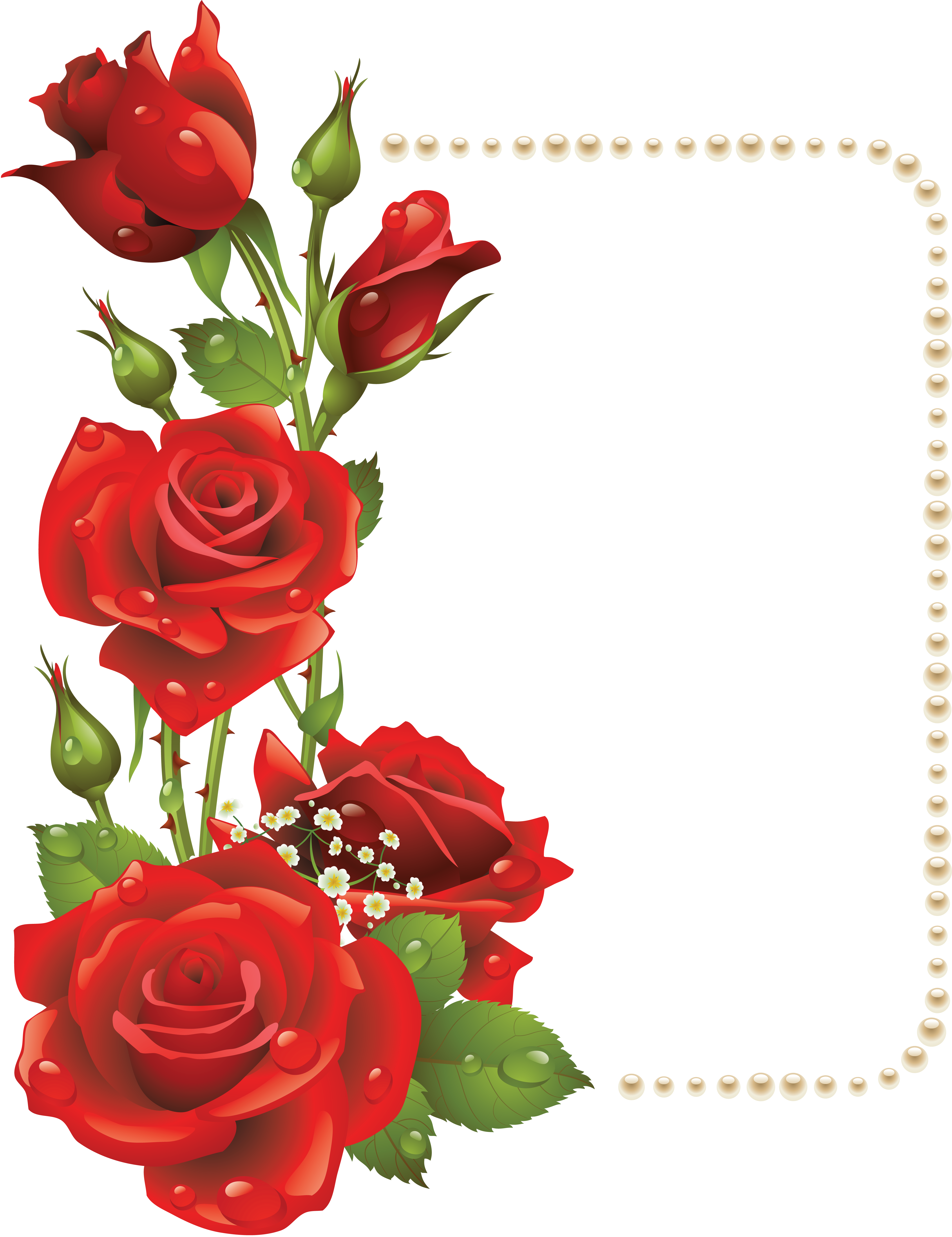 Large Transparent Frame With Red Roses And Pearls Png 4334 5629 Flower Backgrounds Red Roses Photoshop Backgrounds Free