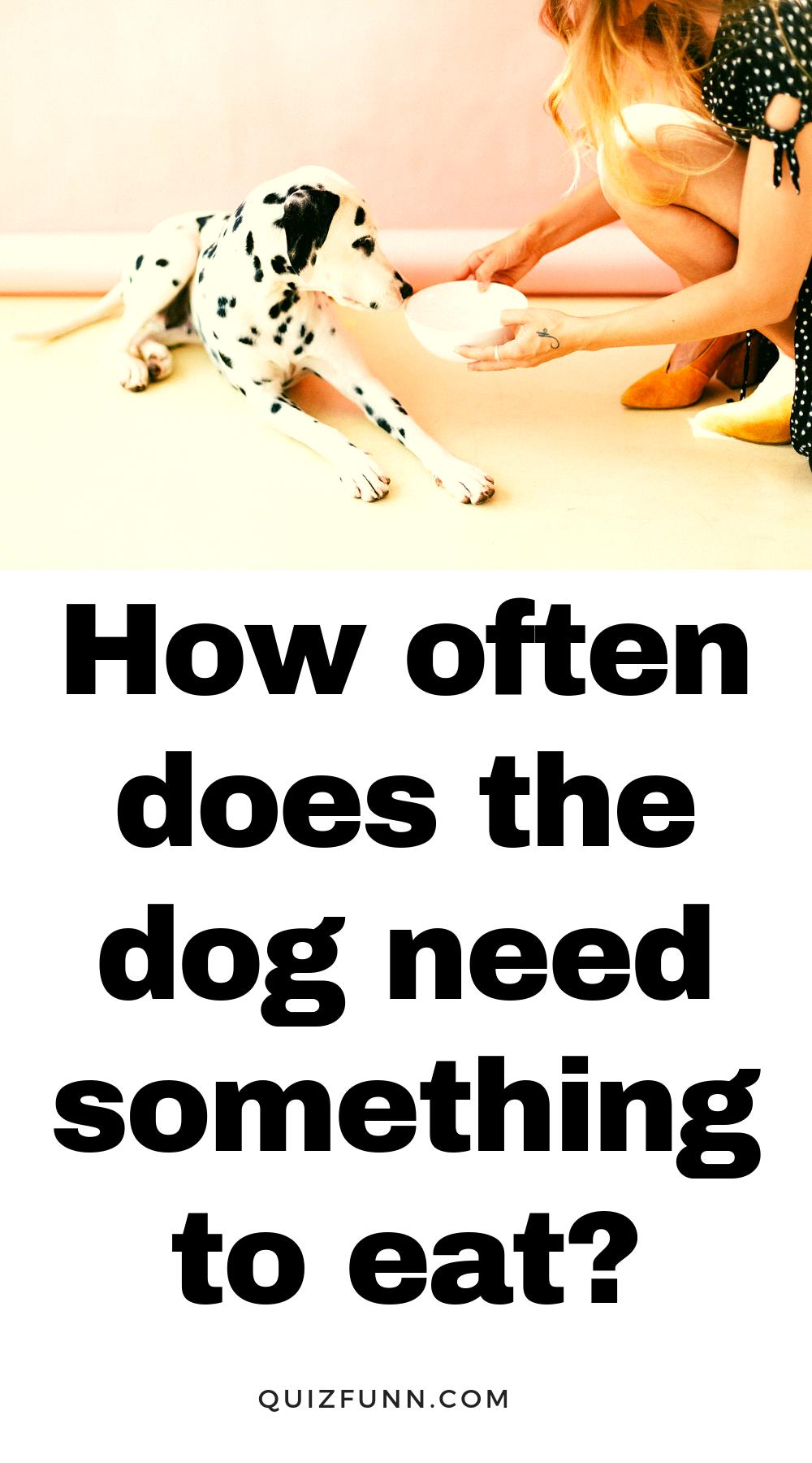 How often does the dog need something to eat ? Feeding