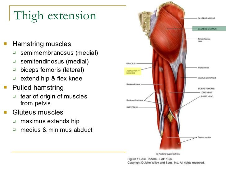 Image result for extension of thigh | Anatomy | Pinterest | Anatomy