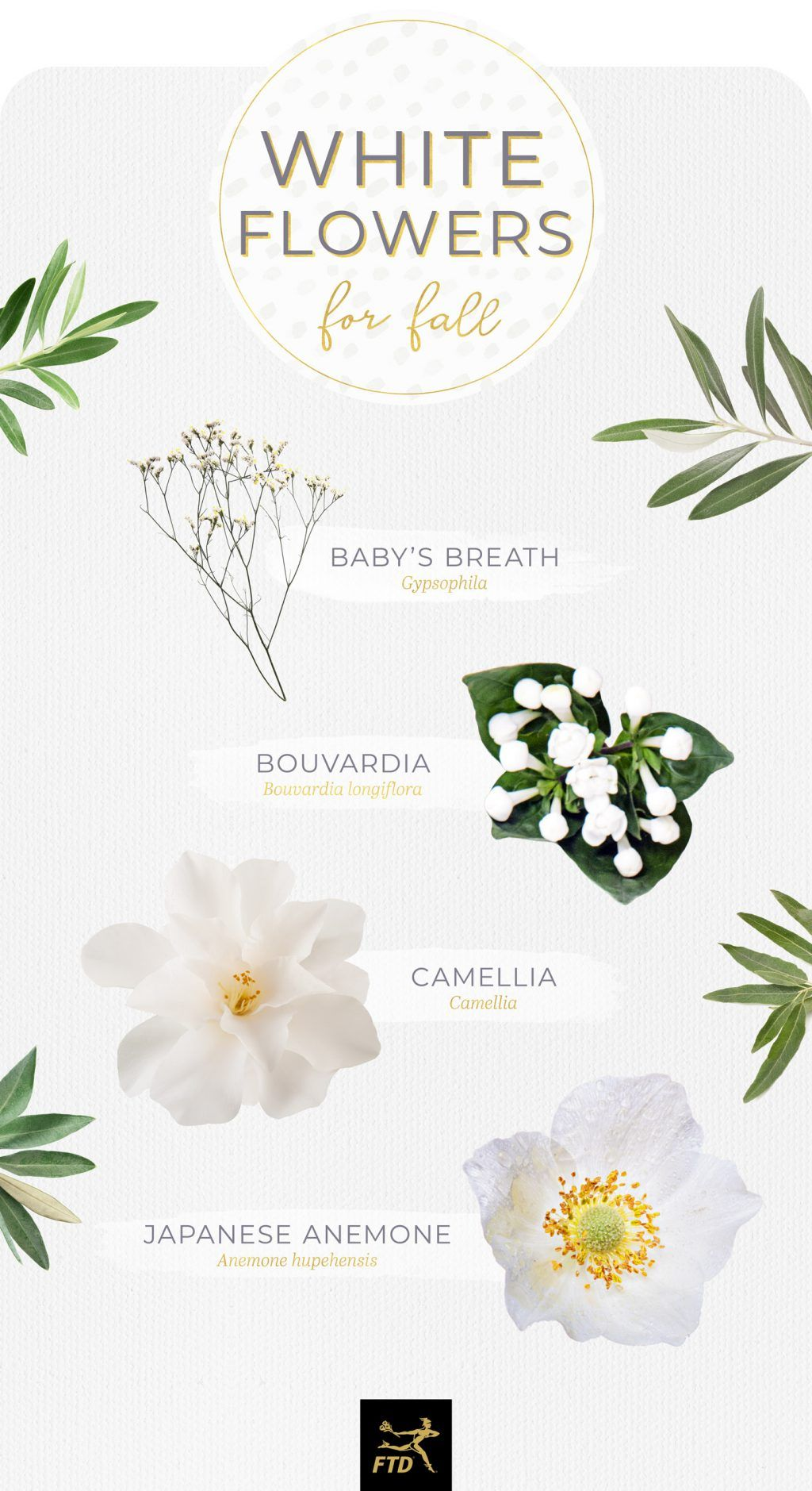 40 Types Of White Flowers Ftd Com In 2020 Types Of White Flowers White Flowers Names White Flowers