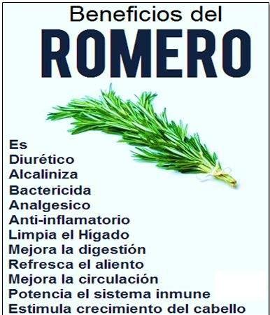 Beneficios del romero el romero es una planta cuyo consumo - Meteorismo remedios ...
