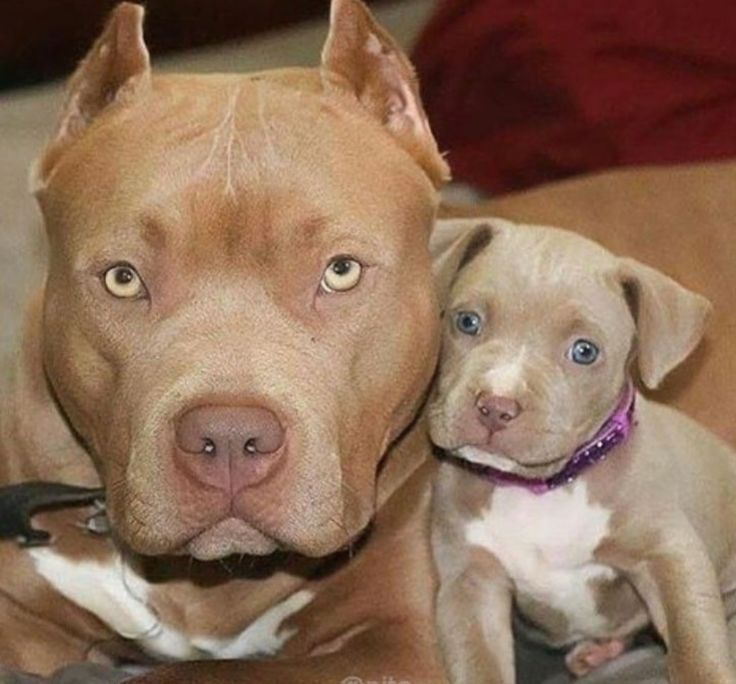 Photo of Mom with her puppy, so cute #diyforpets #hubsch #your #puppy