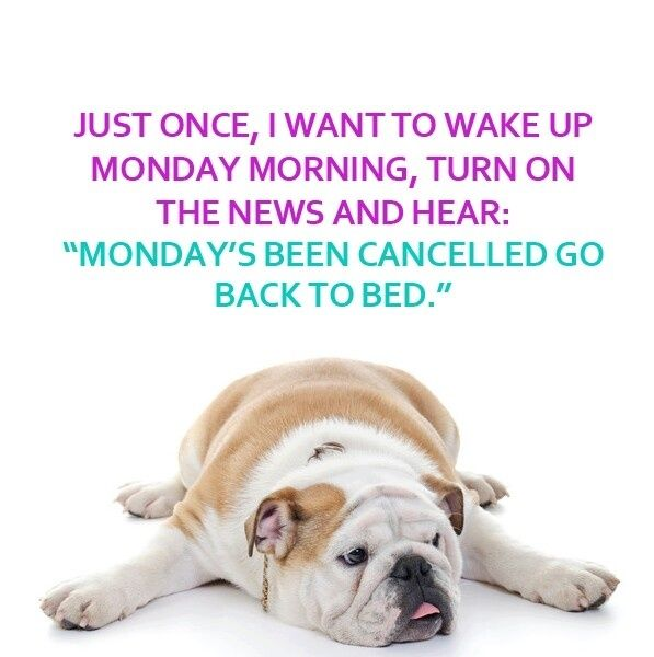 Monday Morning Humor Quotes: Mondays Cancelled Quotes Quote Days Of The Week Monday