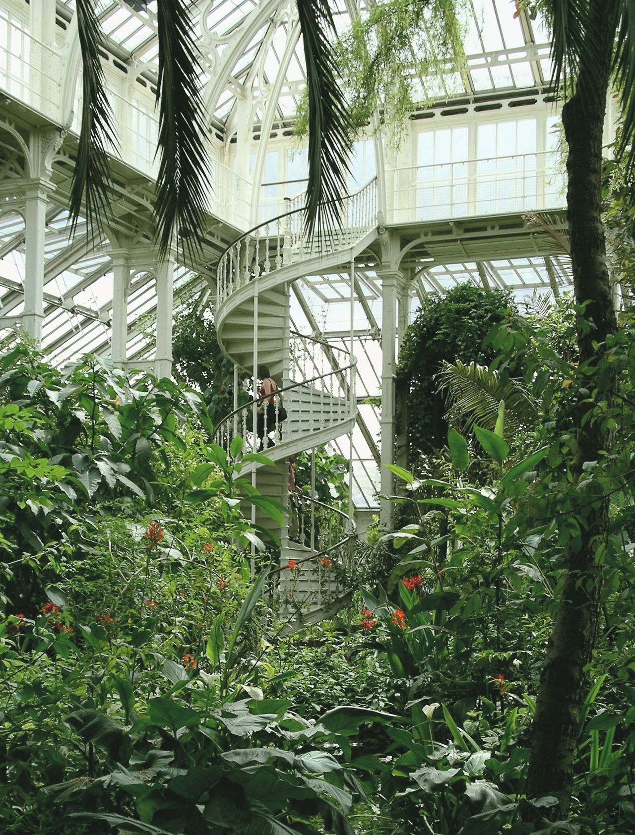 Palm House Kew Gardens London England