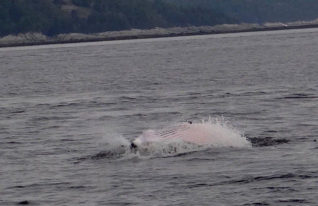 Tadoussac, le meilleur endroit du monde pour observer les baleines, toutes les infos sur les excursions et ce que vous pouvez voir à Tadoussac au Québec.