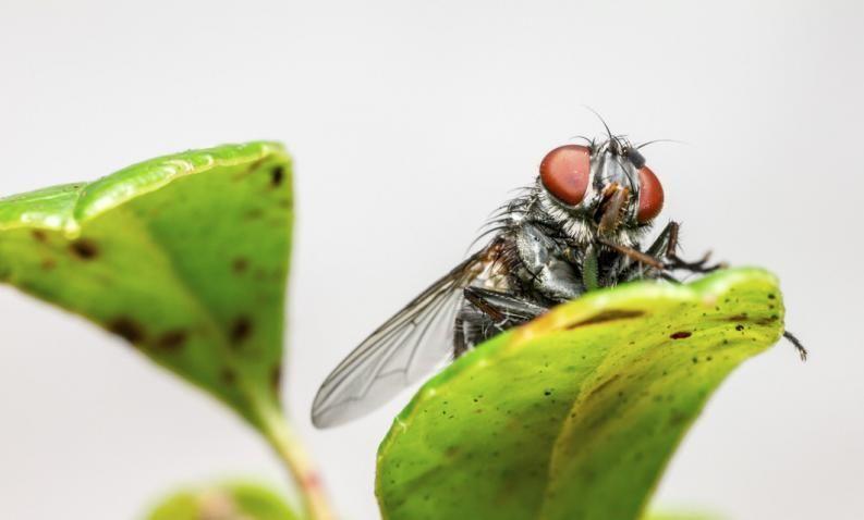 Como Acabar Con Las Moscas De Casa 3 Trucos Caseros Para Acabar Con Las Moscas Combate Los Insectos