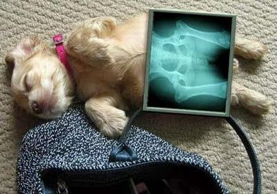 Some Days I Wish I Could Xray Puppies Instead Cute Animals X Ray Animals