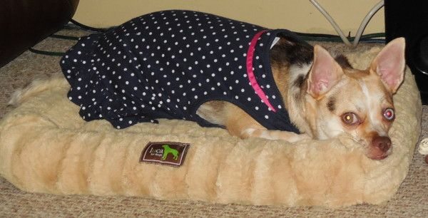 Review Giveaway For A Luca Dog Bed Ends 8 9 15 Dog Bed Dogs Pets