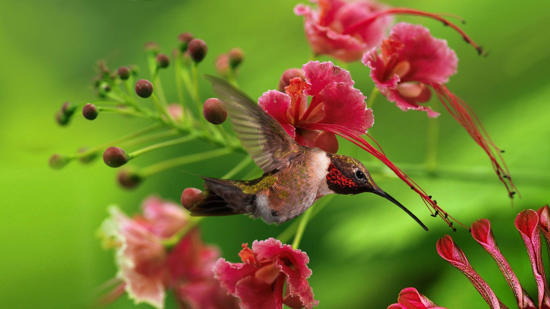 Beautiful Hummingbird and Flowers Hummingbird wallpaper