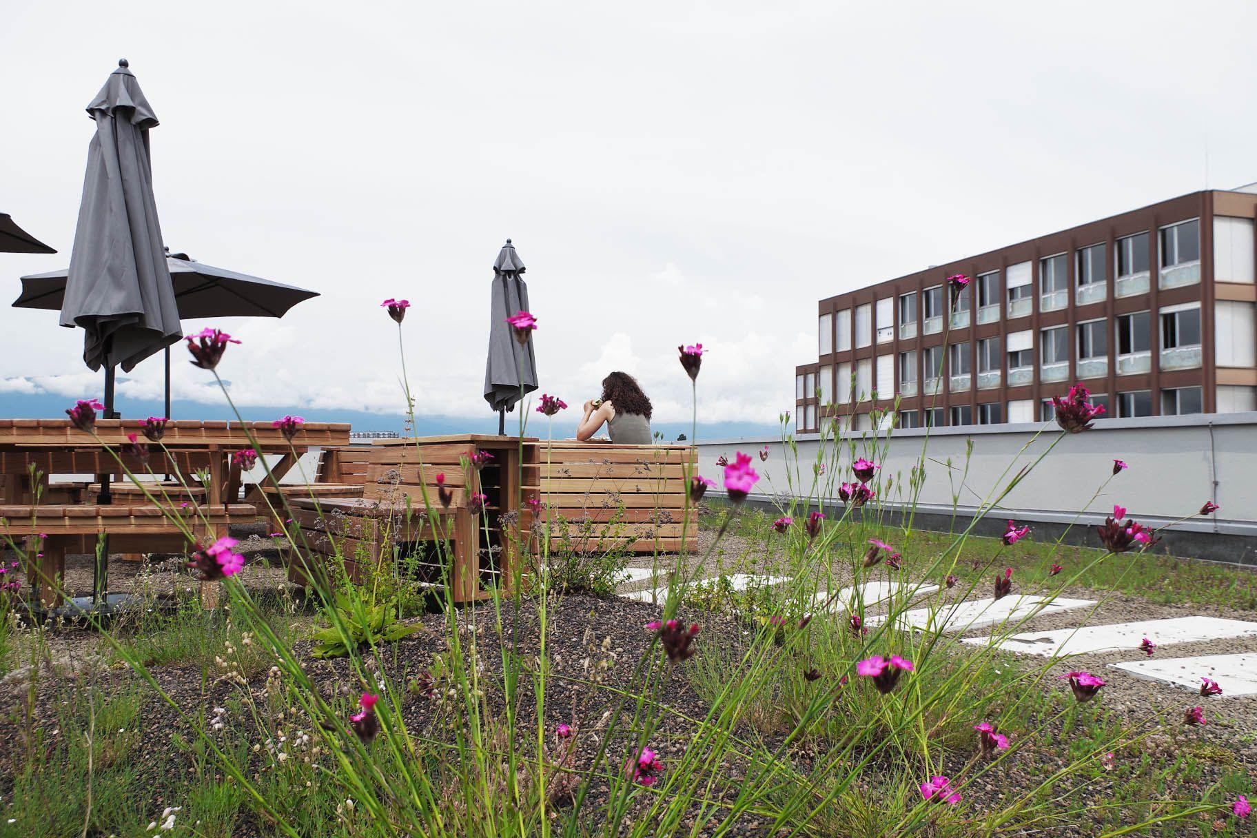 Projet public toiture végétalisée du dip onex reconversion de