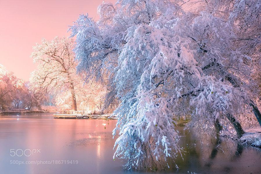 Popular on 500px : Winter Wonderland by TatianaPesotskaya