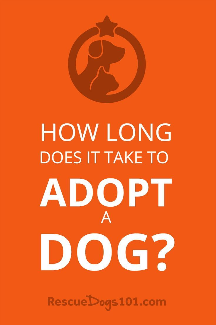 How Long Does It Take To Adopt A Dog? in 2020 | Dog ...