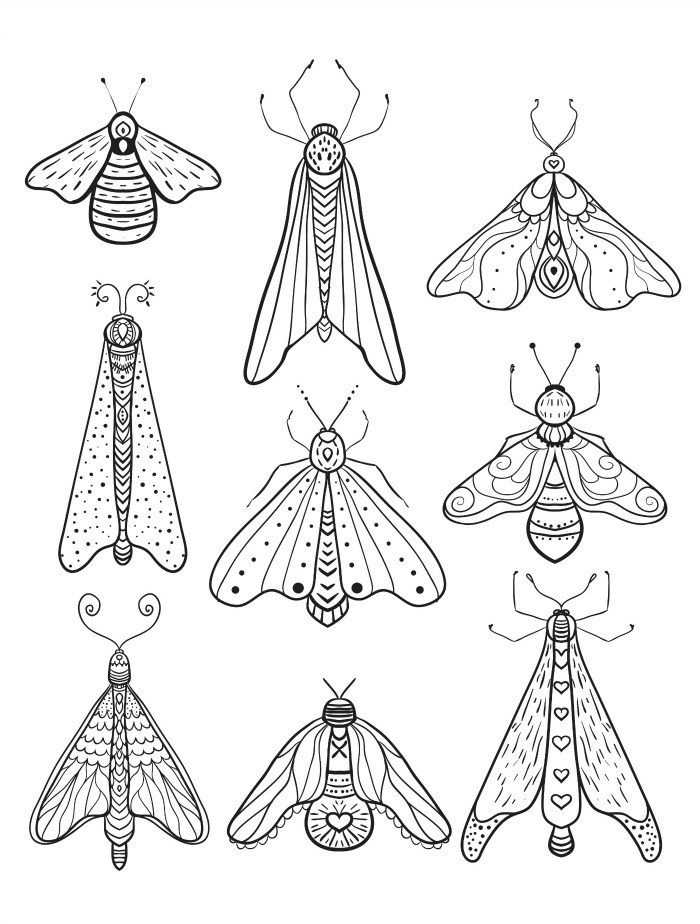 23 Free Printable Insect Animal Adult Coloring Pages Insect