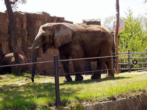 Lincoln Park Zoo Lincoln Park Zoo Lincoln Park Zoo Chicago Lincoln Park