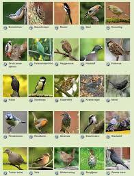 Nieuw vogels in de tuin - Google zoeken | Vogels, Huisdier vogel BR-84