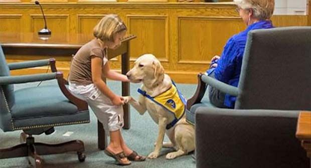 Why Have I Never Heard Of Courthouse Dogs Before 13 Pics Working Dogs Dog Help Dogs