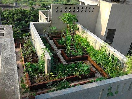 Terraced vegetable garden bing images balcony gardens for Terrace vegetable garden