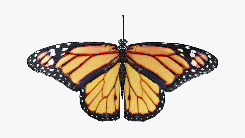 Low-Poly Butterfly - Fully Rigged For Blender 3D asset. #b3d #blender3d #3dmodel #free3d
