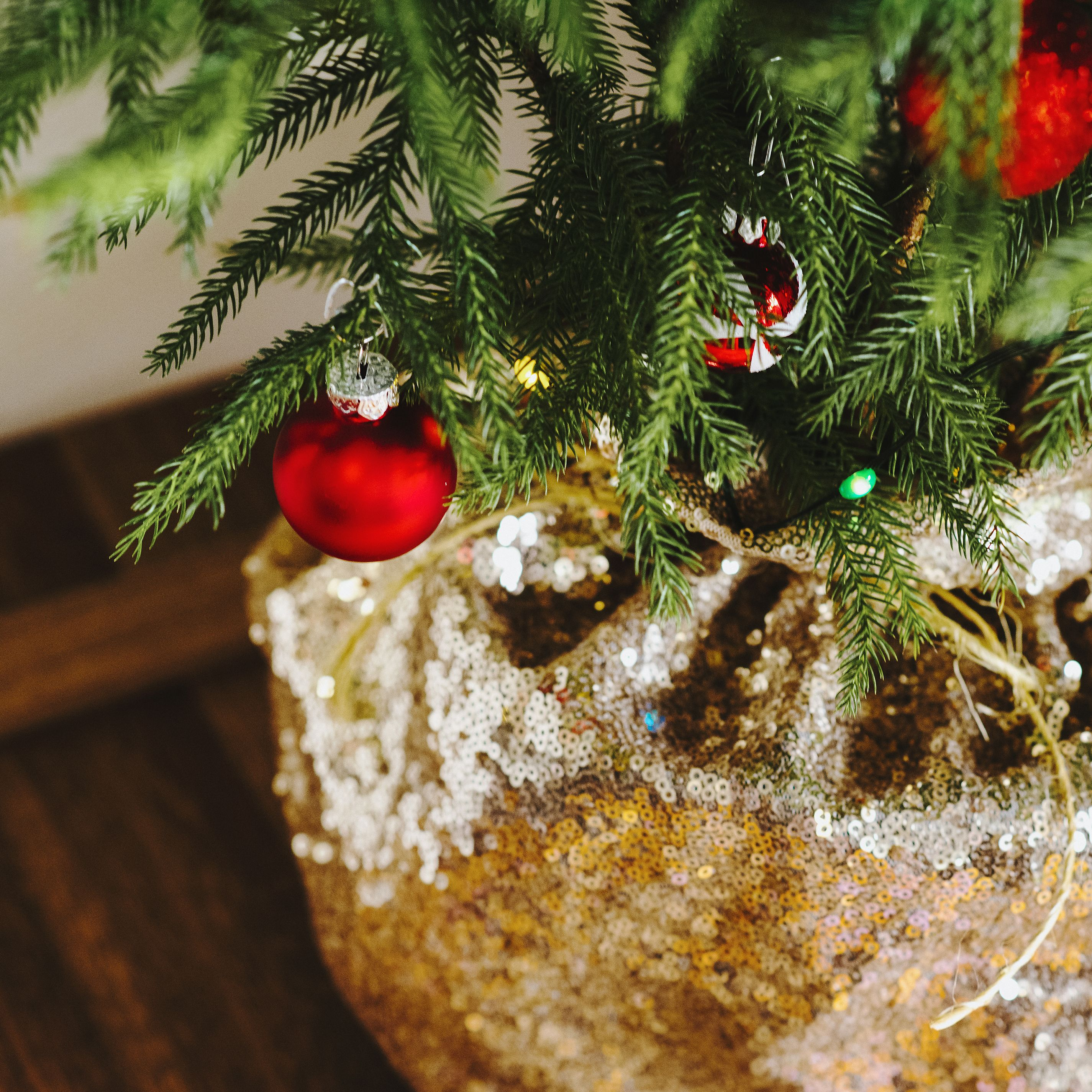 "Norfolk Island Pine Mini Christmas Tree Live Plant, 6"" Pot ..."
