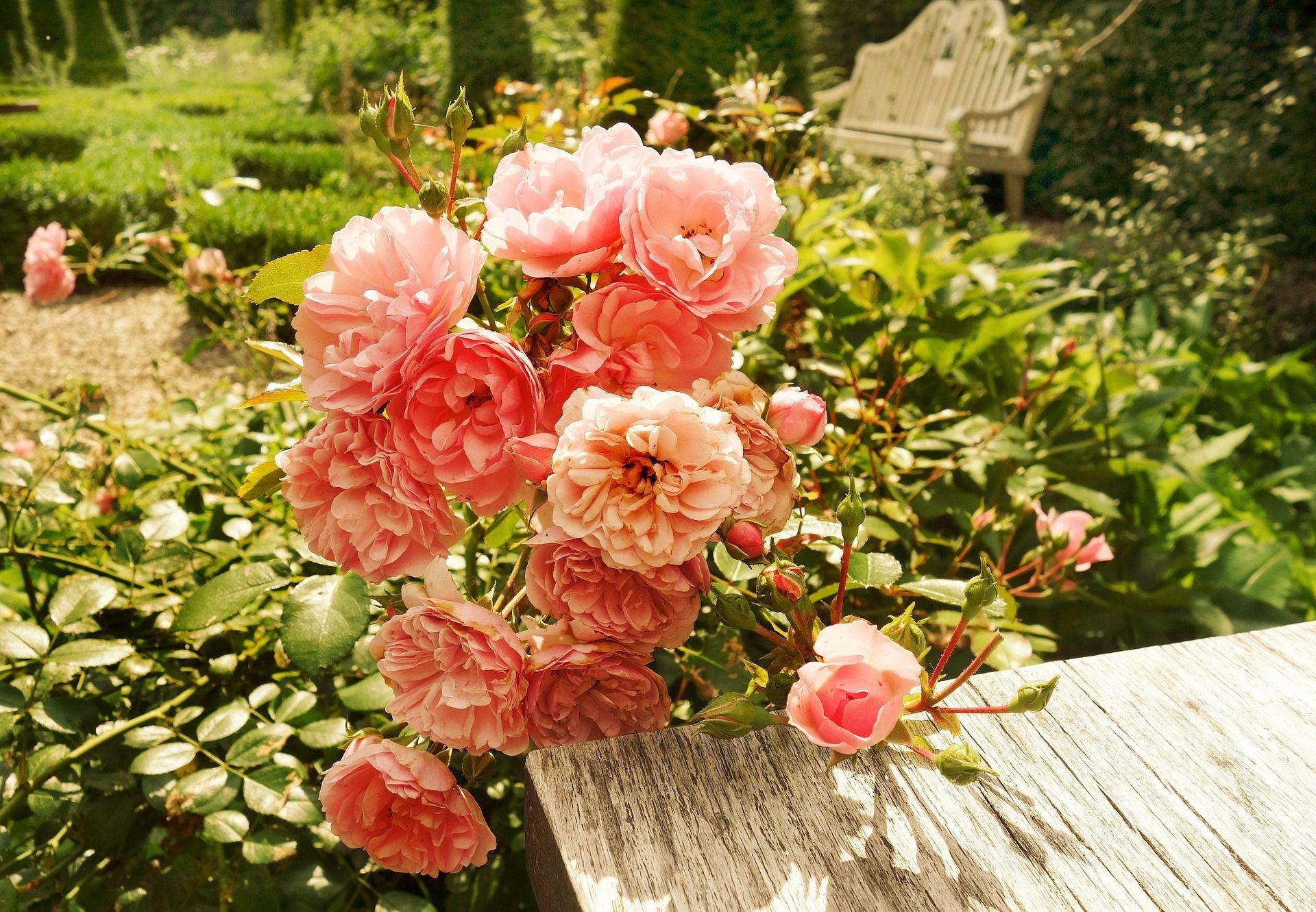 Droga do altanki Fot Shutterstock ogrody ogr³d ścieżka kwiaty