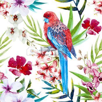 Perroquet Belle Modele Vectoriel Avec L Aquarelle Oiseaux Et